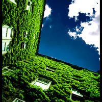 Green Life by gnato