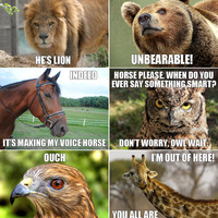 punny animals